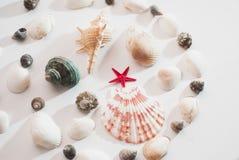 海洋构成 红色星形 免版税库存照片