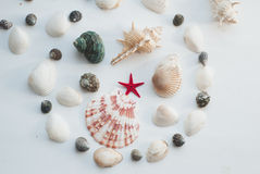 海洋构成 红色星形 免版税库存图片