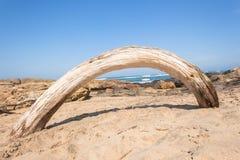 海滩树弯曲的艺术自然风暴 免版税库存图片