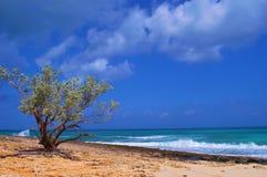 海滩树 免版税库存照片