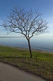 海滩树 图库摄影