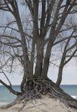 海滩树 免版税图库摄影