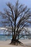 海滩树 免版税库存图片