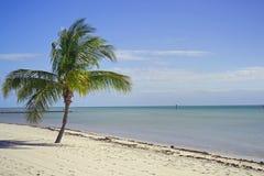海滩棕榈 免版税库存图片