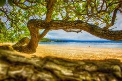 海滩植物 免版税库存照片