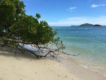 海滩植物 库存图片