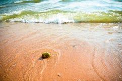 海滩椰子 库存图片