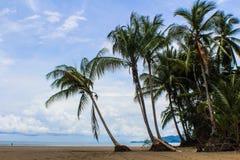 海滩椰子 免版税库存照片