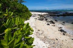 海滩毛里求斯 图库摄影
