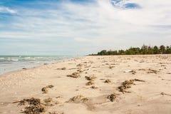 海滩污染 图库摄影