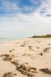 海滩污染 免版税库存图片
