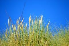 海滩沙丘在夏天 免版税库存图片
