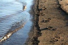 海滨沙子海滩在沙子的河踪影 库存图片