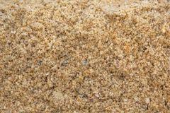 海滩沙子背景II 免版税库存照片