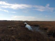 海滩沼泽 库存照片