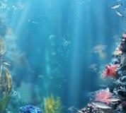 海洋 泡影复制鱼例证生活海运海草空间文本向量 有鱼和珊瑚的水族馆 免版税图库摄影