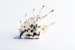 海洋海壳 图库摄影