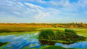 海洋海小河绿叶 库存图片