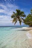 海滩海岛掌上型计算机天堂结构树 库存照片