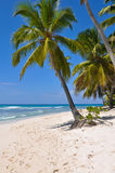 海滩海岛掌上型计算机天堂结构树 图库摄影