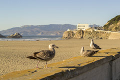 海洋海滩在旧金山,北加利福尼亚 库存图片