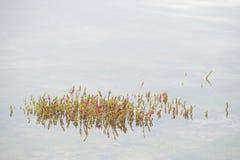 海洋海藻在水中 库存照片