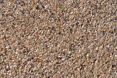 海洋海滩壳 免版税库存图片