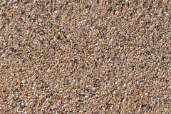 海洋海滩壳 库存照片