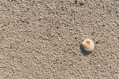海洋海滩壳 图库摄影