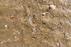 海洋海滩壳 免版税库存照片