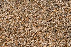 海洋海滩壳 库存图片