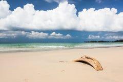 海滩漂流木头和深蓝天空 免版税库存照片