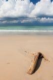 海滩漂流木头和深蓝天空 图库摄影