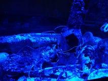 海破烂物艺术 库存图片
