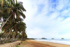 海滩热带的椰子树 免版税库存照片