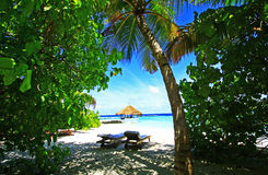 海滩热带的马尔代夫 免版税库存照片