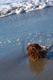 海滩熔铸了红色海草 库存图片