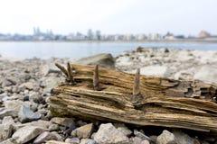 海滩物产 库存照片