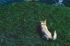 海滩狗享用 库存照片