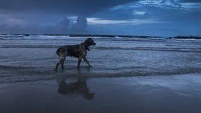 海洋狗 库存图片