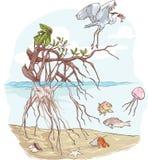 海洋生态系 向量例证