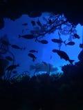 海洋生物和水族馆国家博物馆在台湾 免版税图库摄影