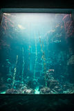 海洋生物和水族馆国家博物馆  免版税图库摄影