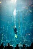 海洋生物和水族馆国家博物馆  库存图片