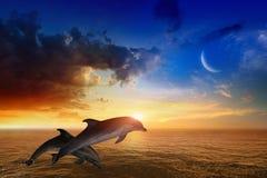 海洋生物背景-跳跃的海豚,发光的日落 库存照片