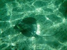 海洋生物 图库摄影
