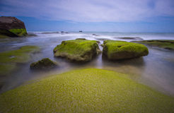 海滩生苔石头 免版税图库摄影