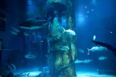海洋生活伦敦水族馆 库存照片