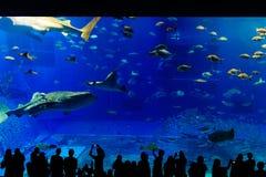 海洋生活公园在冲绳岛 图库摄影