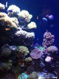 海洋生活在诺拉 免版税库存照片